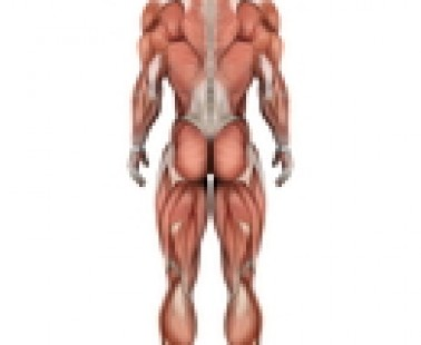 ¿Podrían los problemas musculares ayudar a explicar los movimientos de los pacientes con enfermedad de Huntington?