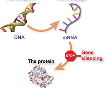 Update confirms Huntington's disease 'gene silencing' trial on track